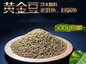 垂钓饵料:黄金豆