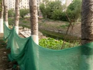绿化带变菜园