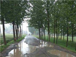姜楼镇庞家村主要道路太难走