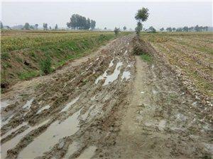 天然水泥路