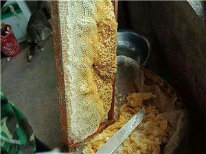 6冃1日新出桶的筠連百花蜂蜜,親來兩斤不?