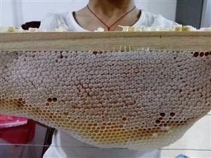 农家蜂蜜收割了,欢迎订购