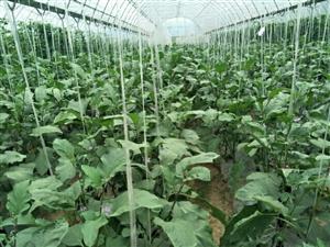 安康市月河口蔬菜采摘观光园区