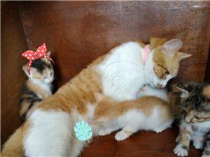 萌猫找新主人