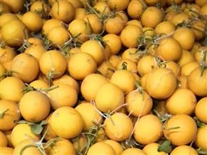 大量供应可甜可甜金玉满堂黄金瓜有需要的联系我13213970288