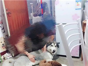 急:重金尋狗