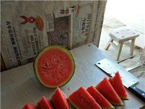 彬縣早飯頭村王金龍家的禮品西瓜汁多味甜。