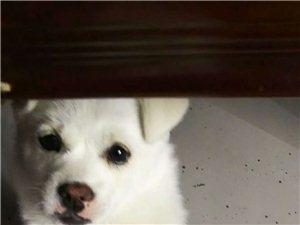 帮忙转发朋友圈,谢谢啦,是我自己养的小狗?#24453;待?朋友们,有没有看到这样的小狗,麻烦联系我,18955