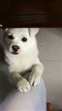 帮忙转发朋友圈,谢谢啦,是我自己养的小狗�待待�