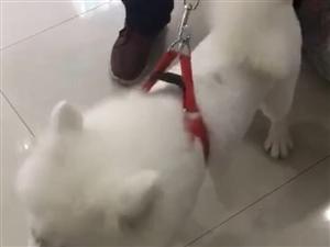 大家�臀铱纯从�]有看到�^�@只狗狗