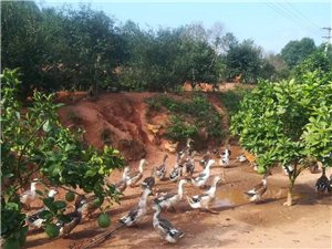 文峰油茶生態農莊
