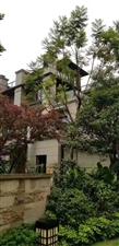 渝北龙头寺轻轨旁联排,大楼居间,多露台大花园3+1