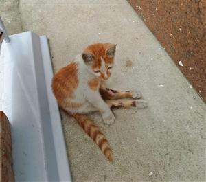 小猫找领养