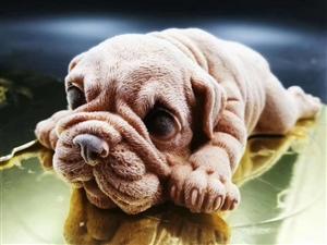 这只小狗有人要吗