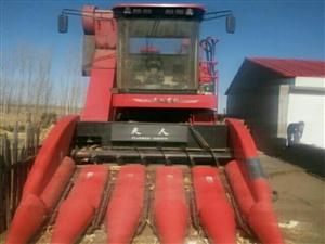 一五年天人五行玉米收割出售