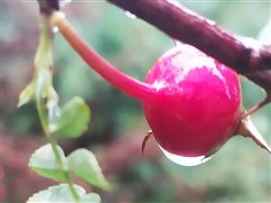朝雨连天碧树低,淡水烟绿画屏幽。自在飞花轻似梦.无边丝雨细如愁。??