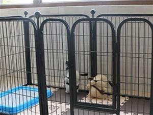 全新宠物围栏低价出售,新买的没用过,50×50的4片,质量特别好。买的时候100多,现在70就卖!!...