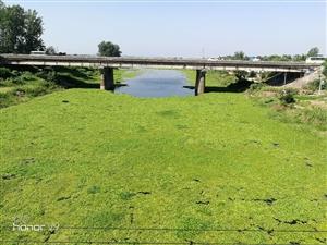 鄂城区新港河水葫芦长势喜人,部分河道全覆盖。长久下去令沿岸居人担优。
