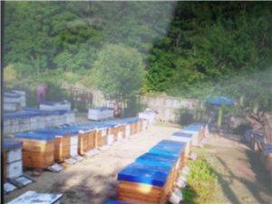 卖纯蜂蜜,零污染,不加糖!