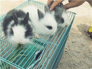 萌萌宠物兔
