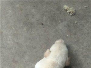 惠比特抓兔子狗