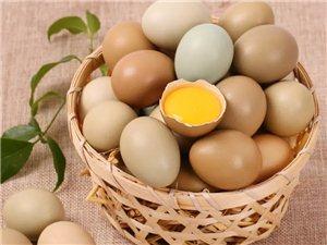 野鸡野鸡蛋