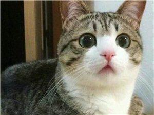 有想养猫的,本人一家猫咪生的,免费领养