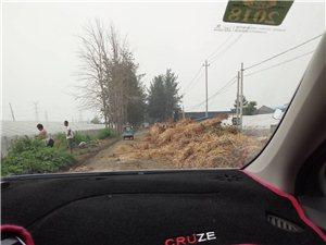 大棚垃圾乱扔乱放阻挡道路,严重妨碍出行