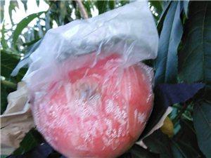 水果供應商