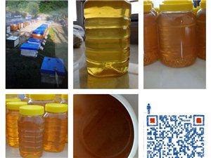 保真纯蜂蜜!18元一斤!