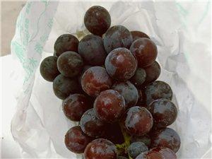 正宗夏黑葡萄