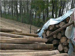 大量收购老榆木梁、老榆木檩条