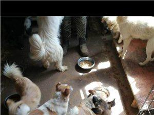 建华收费站:请给毛孩子们一个温暖的家,一顿饱饭