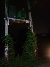 变压器旁边植物上电线杆危险,请电业公司人员帮忙处理。
