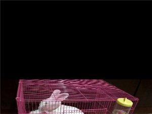 宠物兔免费赠送
