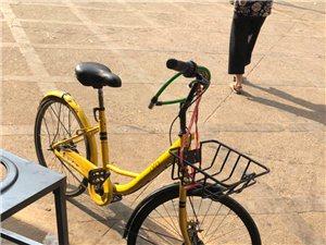 共享单车留己用,第七感双色球软件影响县容颇堪忧