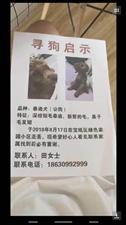 天津市宝坻区绿色家园,我家狗丢了在前天早上绿色家园丢失。