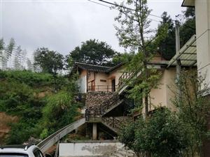 浙江安吉夏阳民居还有屋旁的板栗树