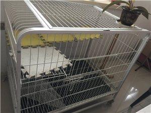 出售猫粮猫砂化毛膏等爱猫用品