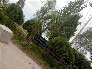 前营村村民私自破坏耕地变成私有停车场