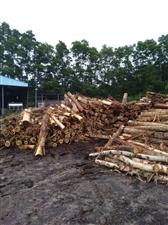 本厂大量收购 桉木和马占木,规格要求长度两米,直径不小于10厘米,不弯曲,不腐朽。 地点琼海市加...