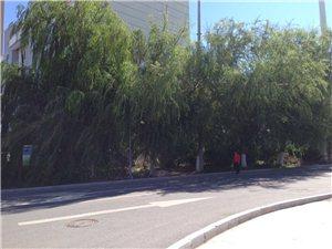 转弯看见的先是树,不是路人和路!
