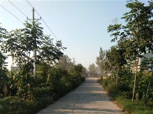 罗岗大汪庄的路,空气
