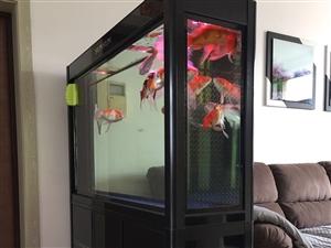 出售二手99新森森牌底滤鱼缸,因家中无人现底价出售,鱼缸内价值1000多的锦鲤免费赠送,