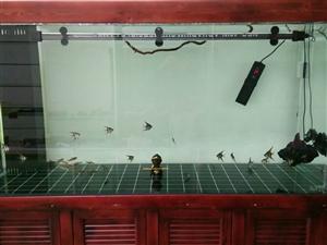 出售新缸。1.8x700x900  山东金晶玻璃,实木底柜。做生意 缸订大了 占地方  赔钱甩卖。全...