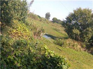 河道长满杂草水质污染严重严重污染环境希望有人管一管梁垛镇通城村七组