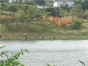 南湖惊现钓鱼人潮,公园资源遭到践踏