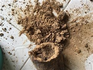 瓜州有人卖掺有泥巴的苁蓉,以劣充好,败坏瓜州名誉。