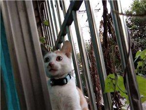 一只找不到家的猫