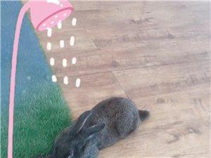 丢失的黑兔子